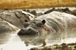 Muddy Hippo Pool