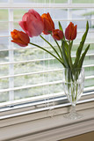 Red Tulips on Window Sill poster