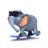 Fototapety Elephant skate boarder