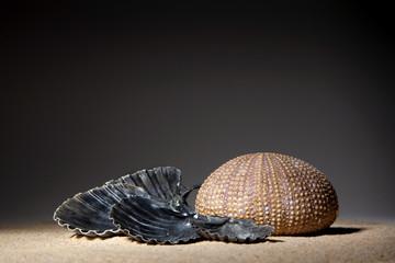 Ambiance zen - coquillages et sable