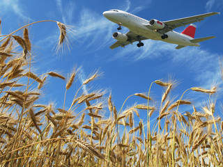 Aircraft over golden wheat