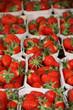 Viele Erdbeerschälchen