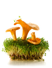 chanterelles and cress