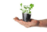 Human hand holding green plant in a transparent cup poster
