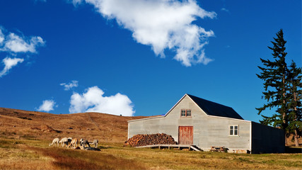 A Wooden Farmhouse on grassland with Alpaca by the front