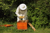 Beekeeper  with honey bees