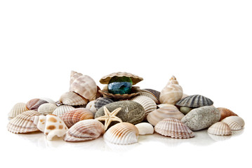 various color shells with stylized pearl isolated on white