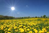 Sun is shining - 22614677