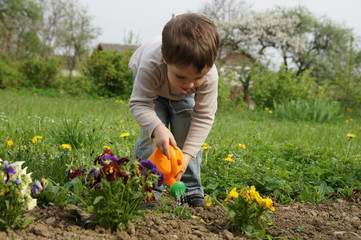 Boy carefully watered flowers