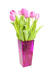 Pink tulips in vase over white background