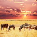 Fototapete Abenteuer - Afrika - Säugetiere