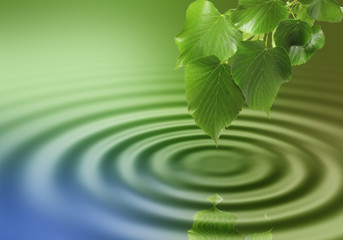 Leaves and water ripple