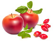 Red ripe apples and rose hips (dog rose hips).