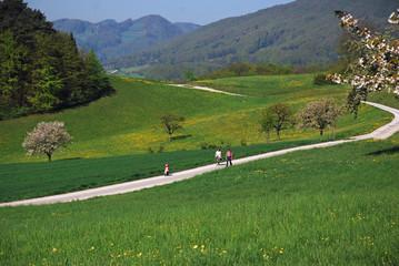 walk in springtime