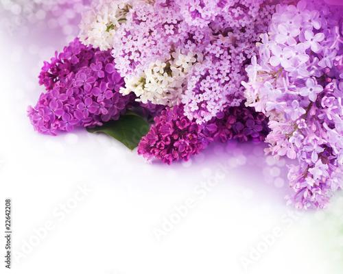Papiers peints Lilac Beautiful Lilac Flowers Border
