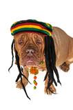 Rasta Doggy poster