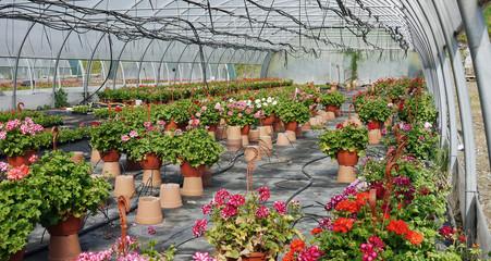 serre jardinerie