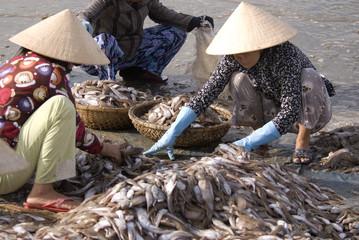 Vietnamese fisheries
