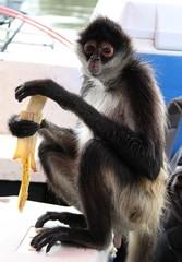 Bootstour mit Frühstückspause, Affe ißt Banane