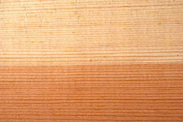 coniferous wooden texture