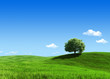 Nature collection - Green meadow 1 tree template