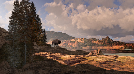 Mountain Buffalo