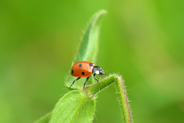 Ladybug with power