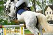 Pferde 116