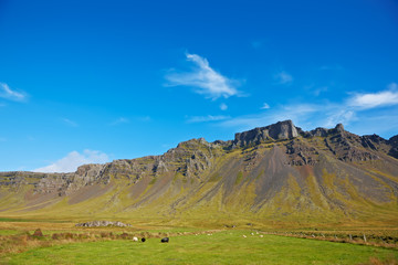 Some sheeps in the meadow, East Fjords, Iceland