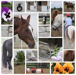 Mosaïque - Equitation