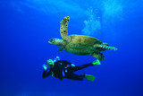 Woman scuba dives with Hawksbill Turtle poster