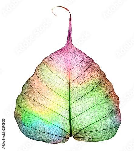Abstract colorful Leaf isolated on white