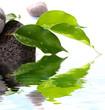 décor minéral et végétal : ficus sur galets