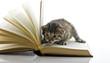 cucciolo sul libro