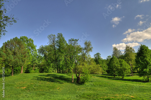 Beautiful landscape in park