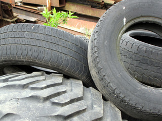 old tires and young plant