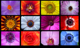 Flowers Collage on a Black background