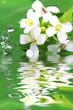 Fototapete Gewässer - Morgentau - Blume