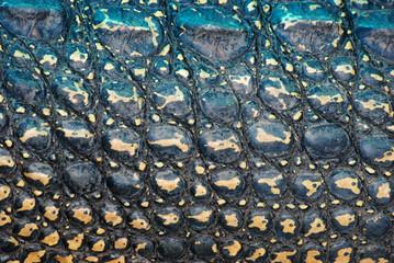 crocodile skin detail texture