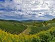 Kaiserstuhl, Weinbaugebiet