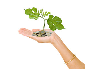 hand with a tree seedling growing from coins