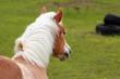 Cavallo & Nobiltà