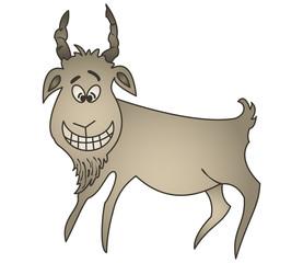 Cheerful goat
