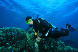 Scuba Diving in the clear blue water of the Red Sea poster