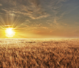 Beautiful sunset over a wheat field in France