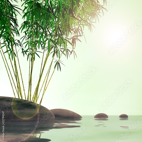 Bamboo plant and stones over a lake