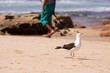 Seagull and fisherman on beach