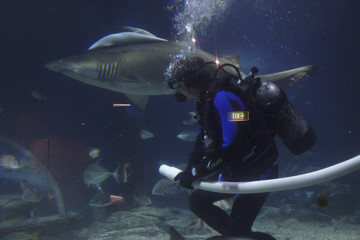 shark and diver in aquarium