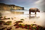 Fototapeta linia brzegowa - nosorożec - Dziki Ssak