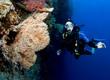 scuba diver on wall dive